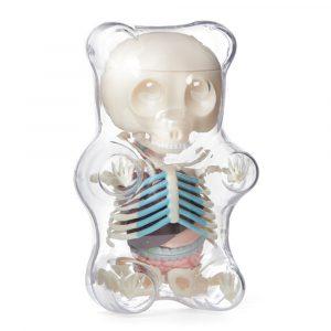 4D MASTER STEM Anatomi Modell Gummi Bear Skeleton Anime Action Figur Vuxna Barn Gåvor Vetenskap DjurModel