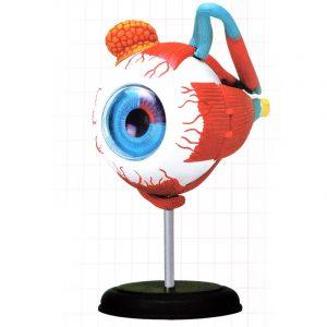 4D MASTER 126mm Ögonmodell Mänsklig Anatomi Medicinsk Modell Ny 3D Struktur Av Ögonpussel