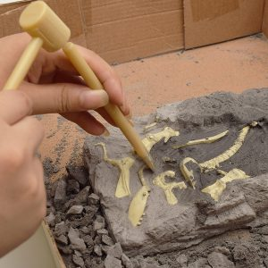 DIY Dinosaur Fossil Diecast Modell Toy Kit Tyrannosaurus Rex Triceratops Pterosaur Mammoth Deinonychus
