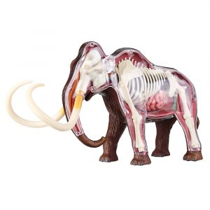 4D Master STEM Simulering Mammoth Anatomical DIY Assembly Modell Gift Collection Science Toy